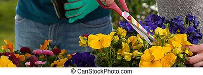 植えつけ, 花, 園芸家
