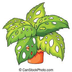 植物の 鍋