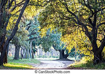 植物学, こけ, 上に, オーク, 湾, かけられた, 生きている, edisto, プランテーション, 川, サウスカロライナ
