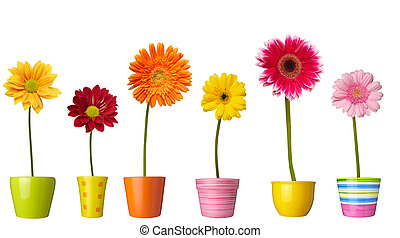 植物学, 花園, 自然, ポット, デイジー, 花