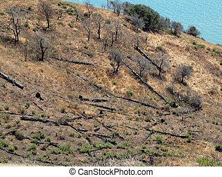 植物生活, 返回, 对于, 燃烧, 山坡