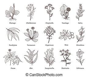 植物, いたずら書き, コレクション, ハーブ, ベクトル, 薬効がある