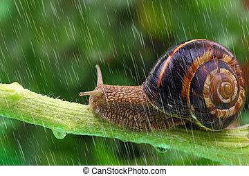 植物, かたつむり, 雨, 緑の背景, 這う