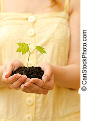 植物, ∥で∥, 土壌, 中に, 手