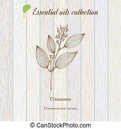 植物, オイル, 芳香がする, シナモン, ラベル, 必要