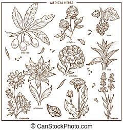 植物, スケッチ, アイコン, 医学, 隔離された, ハーブ, ベクトル, 薬, 草