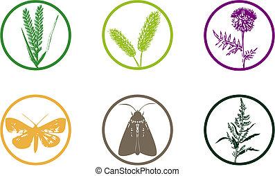 &, 植物, セット, アイコン, 雑草
