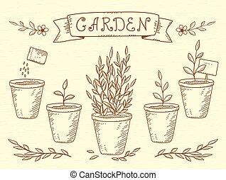 植物, セット, ポット
