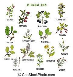 植物, セット, astringent, 手, herbs., 引かれる, 薬効がある