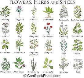 植物, セット, officinale, icons., ハーブ, 治癒, plants., スパイス