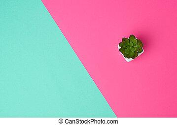 植物, セラミック, 緑の背景, ポット, 白, ピンク