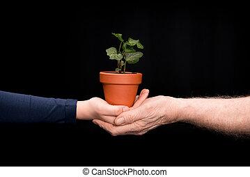 植物, ツタ, 孫, 祖父