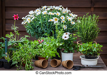 植物, ハーブ, 花, 庭