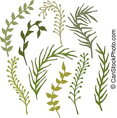 植物, ブランチ, hand-drawn, セット, 海草