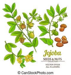 植物, ベクトル, jojoba