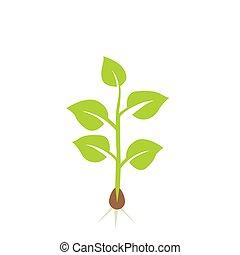 植物, ベクトル, seedling., イラスト