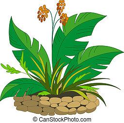 植物, ベリー, ベッド
