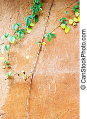 植物, 上に, ∥, 型, 泥, 壁