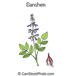 植物, 中国語, また, セージ, salvia, danshen, 薬効がある, miltiorrhiza, 呼ばれる