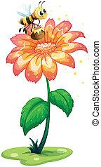 植物, 保有物, ポット, 巨人, 蜂, 蜂蜜, の上