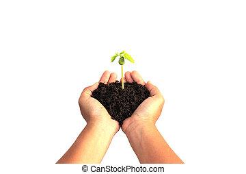 植物, 保有物, 若い, 土壌, 隔離された, 手, 背景, 白
