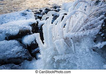 植物, 冬季, 冻结湖, 早晨, 岸, 小, 冷