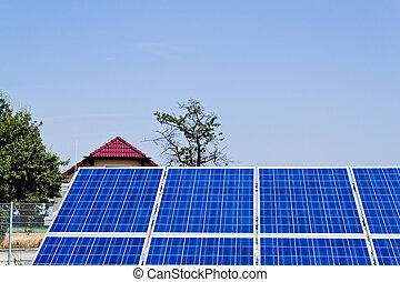 植物, 力, エネルギー, energy., 太陽, 選択肢