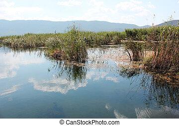 植物, 北方, prespes, florina, 湖, 希腊