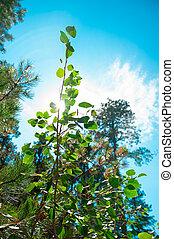 植物, 国, アメリカ, 側