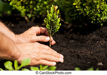 植物, 圖像, 特寫鏡頭, 綠色, 扣留手, 男性, plant.