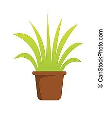 植物, 在, 罐