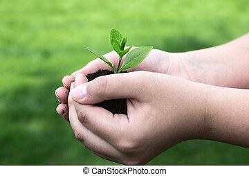 植物, 在, the, 女孩, 手