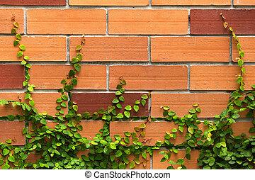 植物, 壁, クリーパー, 緑の背景, れんが