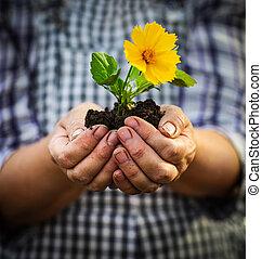 植物, 女, 彼女, 若い, 黄色, 手, 花, 緑, 保有物
