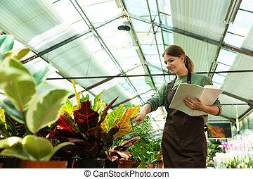 植物, 女, 温室, 点検, 勉強, イメージ, 記録, 若い, 手, ∥あるいは∥, 庭師