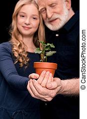 植物, 孫娘, ツタ, 祖父