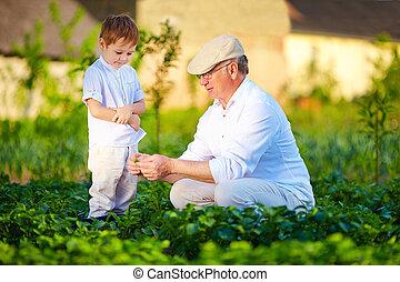 植物, 孫, 自然, 成長, おじいさん, 不思議である, 説明する
