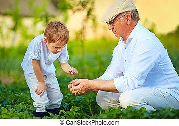 植物, 孫, 自然, 祖父, 成長, 説明する