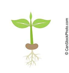 植物, 定着する, 実生植物