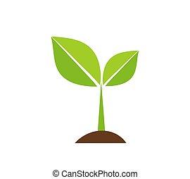 植物, 実生植物, アイコン