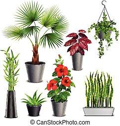 植物, 家, セット, 現実的