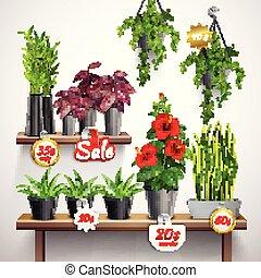 植物, 家, 店
