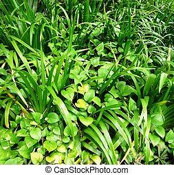 植物, 屋外, 緑