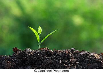 植物, 年輕