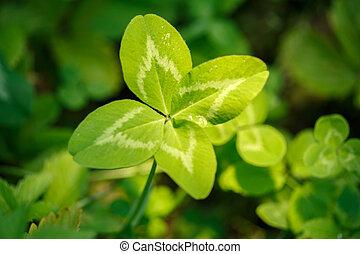 植物, 幸福, 成功, シンボル, st. 。, leaves., day., 主題, 概念, 4リーフの, 4, 運, joy., clover., patrick's