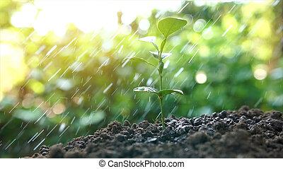 植物, 庭, エコロジー, 自然, 概念, 水まき, 背景