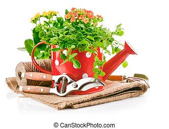 植物, 庭 用具, 水まき, 緑, 缶, 赤