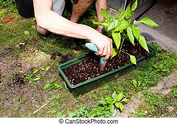 植物, 庭, aloe, 植えかえしなさい, ヴィエラ, 緑, 庭師