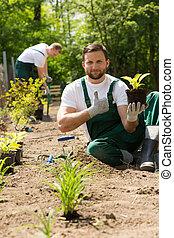 植物, 彼の, 庭師, 手