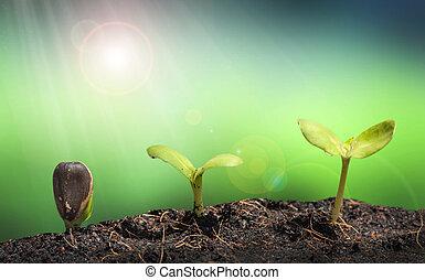 植物, 性质, 土壤, 闪耀, 透镜, 堆, concep, 小, 绿色